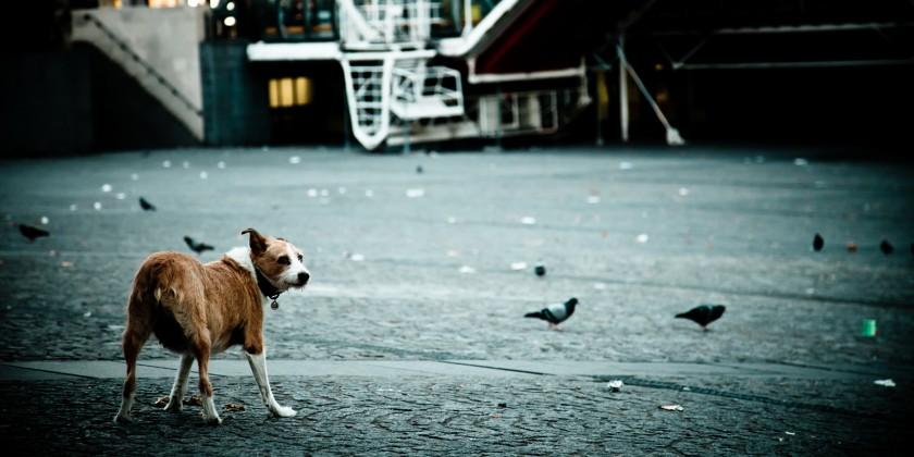 2011-10 Nuit de chien