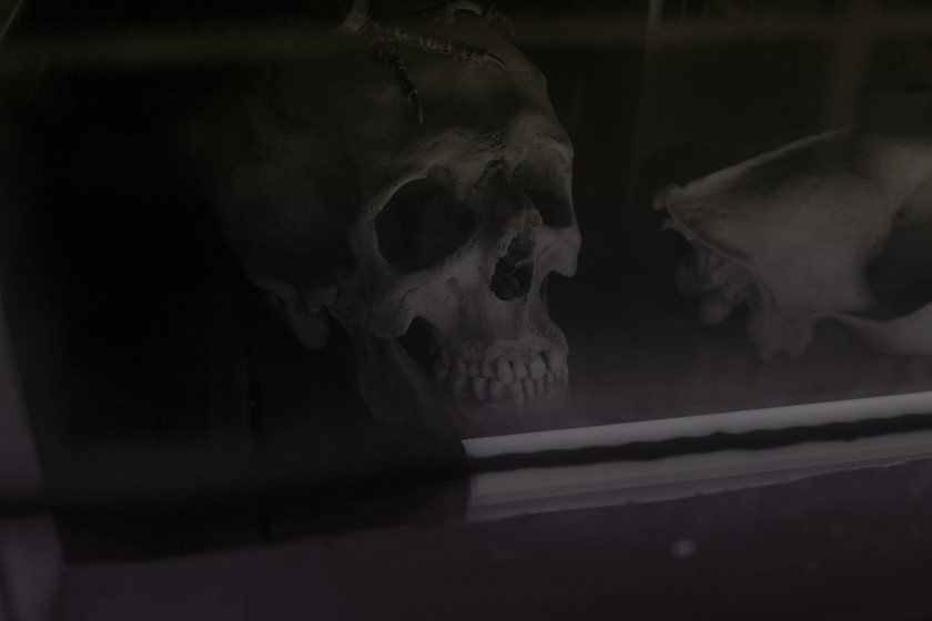 2013_11 AMSTERDAM #3 DEAD